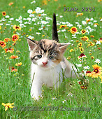 Marek, ANIMALS, REALISTISCHE TIERE, ANIMALES REALISTICOS, cats, photos+++++,PLMP2291,#a#
