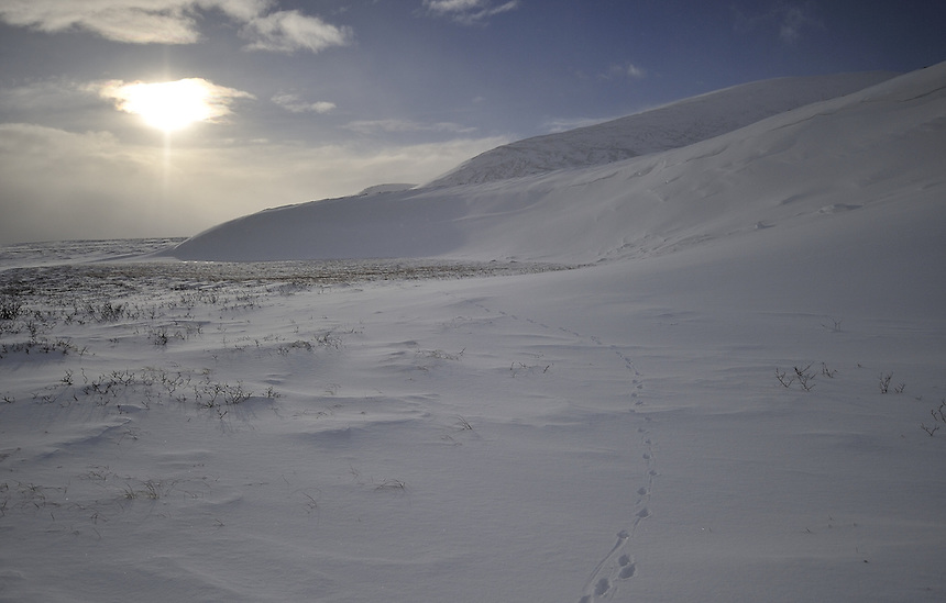 Winter on Dovre mountain,Norway Landscape, landskap,