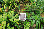 Bromeliad flour sign plant, Princess of Wales conservatory, Royal Botanic Gardens, Kew, London, England, UK