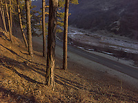 FOREST_LOCATION_90042