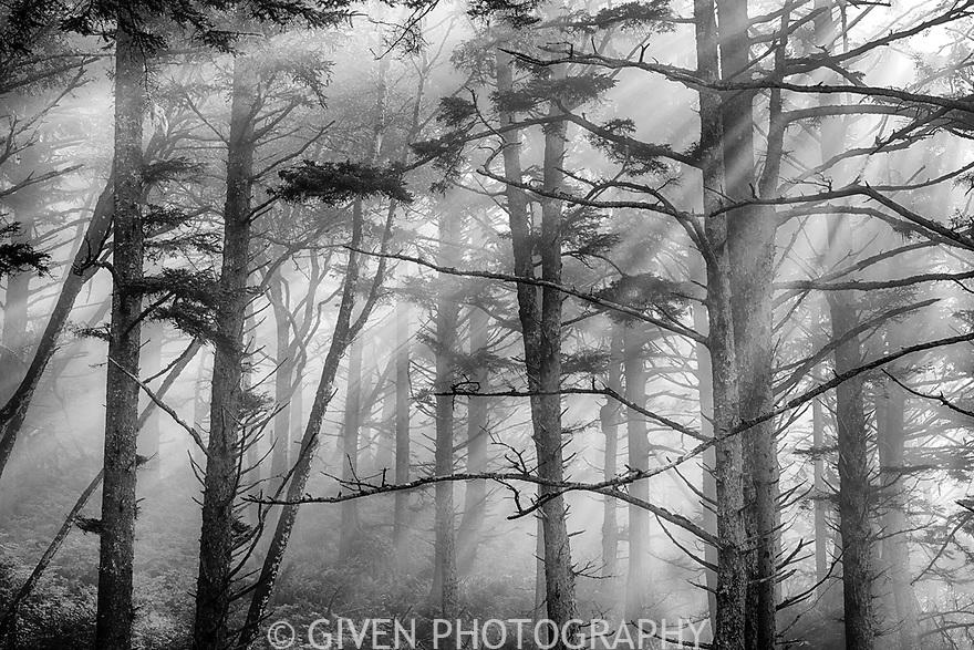 Coastal Forest, Olympic National Park, Washington