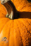 Pumpkin and dew