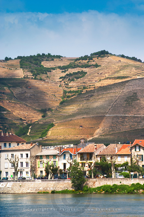 The town Tain l'Hermitage, the riverside side, the river Rhone.   The Hermitage vineyards on the hill behind the city Tain-l'Hermitage, on the steep sloping hill, stone terraced. Sometimes spelled Ermitage.  Tain l'Hermitage, Drome, Drôme, France, Europe