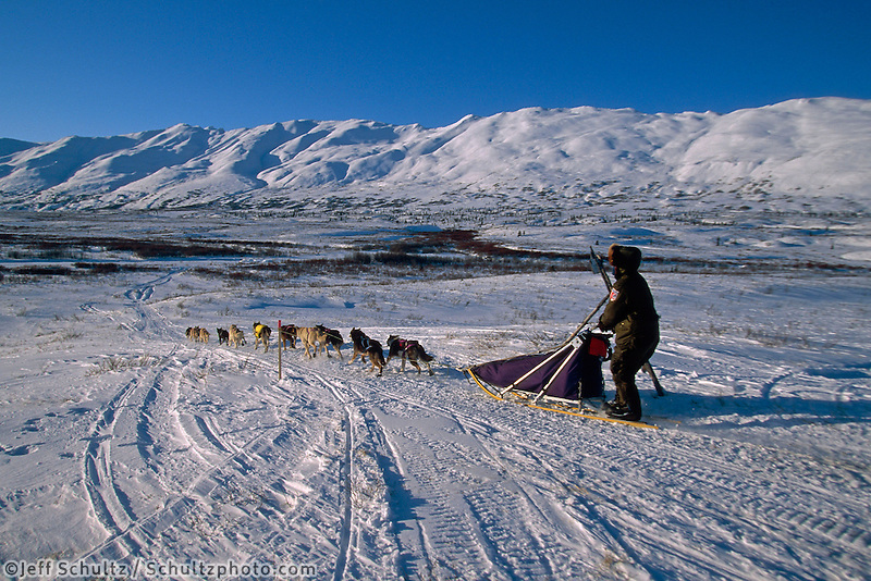 Hugh Neff In Rainy Pass Area Alaska.2004 Iditarod