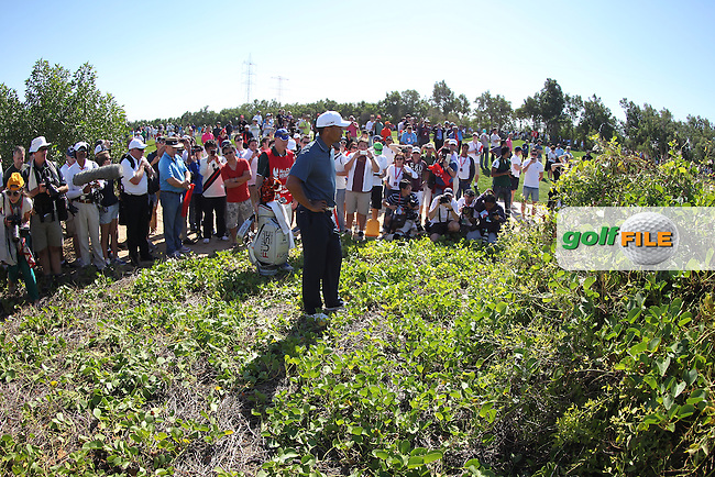 Tiger Woods (USA) looking at where his tee shot was in the bushes on the 5th during the second round at the Abu Dhabi HSBC Golf Championship in the Abu Dhabi golf club, Abu Dhabi, UAE..Picture: Fran Caffrey/www.golffile.ie.