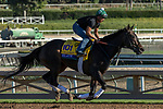 ARCADIA, CA  OCTOBER 25: Breeders' Cup Distaff entrant Elate, trained by William I. Mott, exercises in preparation for the Breeders' Cup World Championships at Santa Anita Park in Arcadia, California on October 25, 2019.. (Photo by Casey Phillips/Eclipse Sportswire/CSM)