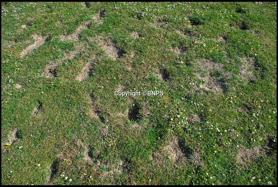 BNPS.co.uk (01202 558833)<br /> Pic: PhilYeomans/BNPS<br /> <br /> Holes left on Cranborne Middle School playing field by the bunnies.<br /> <br /> Bunny spoiler...<br /> <br /> A school has been forced to cancel its sports day and ban children from its playing field after its attempts to control a plague of rabbits failed.<br /> <br /> Cranborne Middle School got in a stew after the bothersome bunnies dug countless holes in the school playing field, with children tripping in the holes and hurting themselves.<br /> <br /> Staff at the school in Dorset have worked with a landscaping company and gamekeepers from the Cranborne Estate to cull the colony using ferrets, gas and shooting in recent years, but say this year the rampant rabbits have multiplied more than ever.