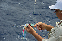 deckhand Walter Morehead sets out lure on charter boat Reel Addiction, Vava'u, Kingdom of Tonga, South Pacific Ocean