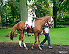 Littlebuzz with Mr. Jimmy Cespedes before The Fegentri Amateur Riders Club of America Race at Delaware Park on 10/3/15
