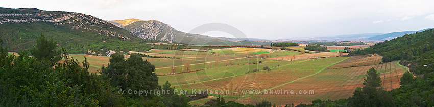 Chateau Pech-Latt. Near Ribaute. Les Corbieres. Languedoc. The vineyard. France. Europe.