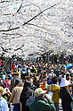 Tokyo, Japan - April 8: People enjoyed cherry blossoms in Yoyogi Park, Shibuya, Tokyo, Japan in the fair weather on April 8, 2012.