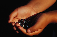 Tahitian black pearls in the hands of a young girl in Tahiti, French Polynesia