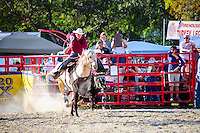 Cowboy ropes a calf at 65th year of The Homestead Rodeo, Homestead, FL, on January 26, 2014
