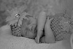 Newborn 17 day new session at The Studio Yosemite, Joelle Leder Photography Studio © 2013