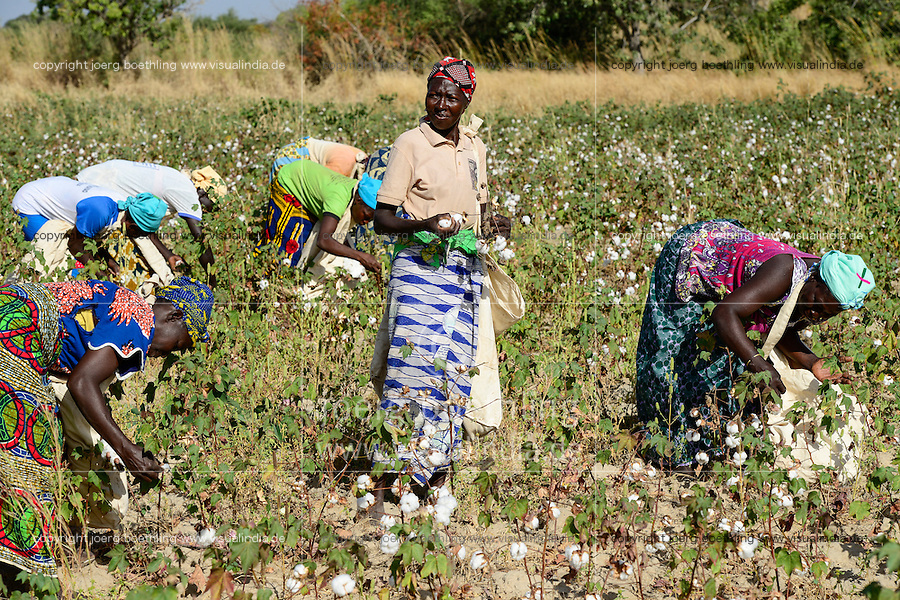BURKINA FASO, village GOUMSIN near SAPONE, organic and fair trade cotton farming, manual harvest at farm / fair gehandelte Biobaumwolle, Frauen bei der manuellen Ernte