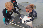 Stephanie & Katie Working On Bat Ray