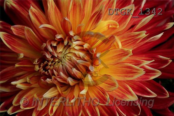 Gisela, FLOWERS, photos(DTGK1342,#F#) Blumen, flores, retrato