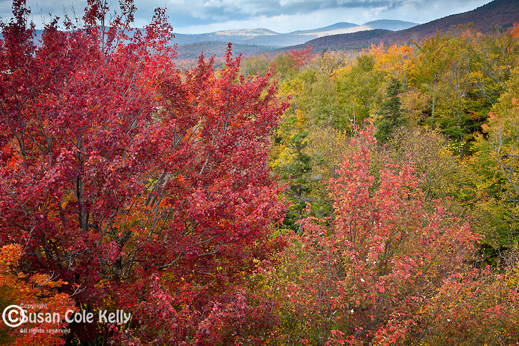 Fall foliage in Franconia Notch State Park, NH, USA