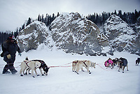 Mike Williams Adjusts Dog Positions on Team Near Ruby<br /> Yukon River