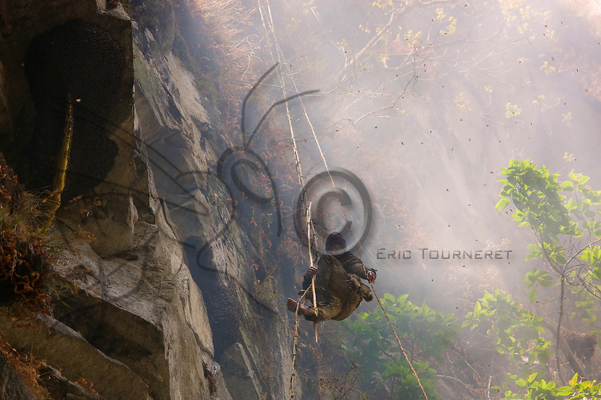 Handling the long bamboo poles while under repeated attacks by the swarms requires uncommon composure and self-assurance. For this phase of the operation, the Perengge uses a rope to secure himself to the ladder.