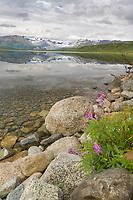 Gakona glacier and Summit Lake, Alaska Range mountains, Interior, Alaska