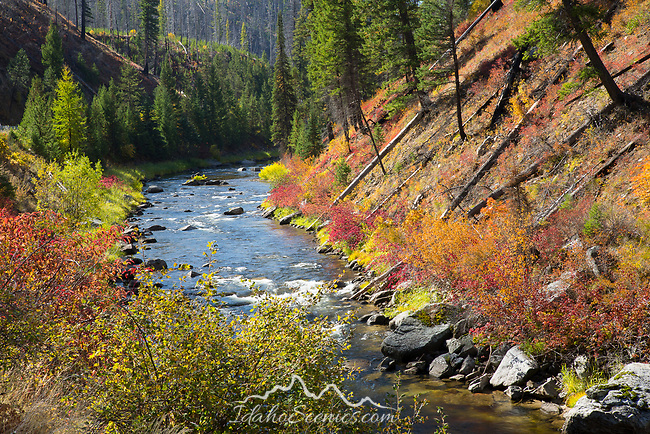 Idaho, Central, Cascade, McCall. South Fork of the Salmon River as it travels through the rugged an remote section of the Payette National Forest and the Salmon River Mountains in autumn.