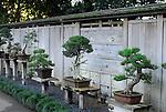 Bonsai trees at Huntington Library and Gardens