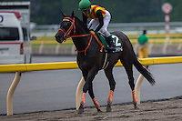 TOKYO,JAPAN-JUNE 19: Gold Dream,ridden by Yuga Kawada, is coming back after winning the Unicorn Stakes at Tokyo Racecourse on June 19,2016 in Fuchu,Tokyo,Japan (Photo by Kaz Ishida/Eclipse Sportswire/Getty Images)