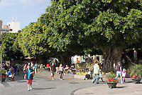 Spain, Canary Islands, La Palma, Los Llanos de Aridane: Calle Real former Calle General Franco), pedestrian area with old Bay trees