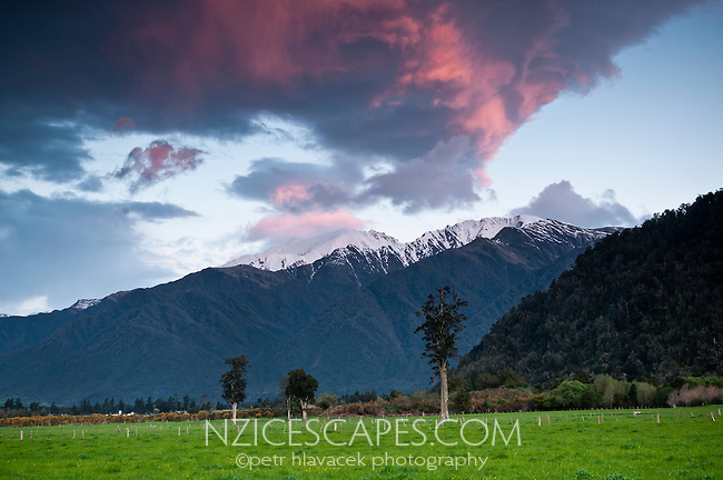 Sunset above farmland near Whataroa. Kahikatea tree and Mt. Adams in background, South Westland, West Coast, New Zealand