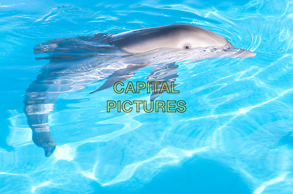 SCENE - WINTER .in Dolphin Tale.*Filmstill - Editorial Use Only*.CAP/FB.Supplied by Capital Pictures.