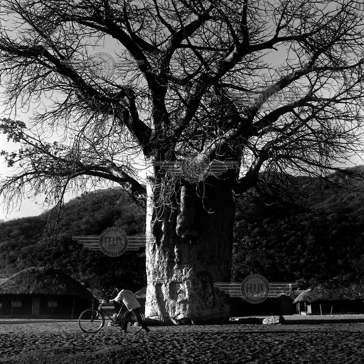 A man walks his bicycle past a Baobab tree in the small tourist town of Money bay on the shores of Lake Malawi.