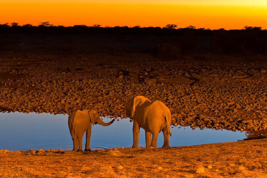 Elephants at a watering hole at sunset, Etosha National Park, Namibia