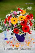 Carl, FLOWERS, photos, SWLA4000,#f# Blumen, Natur, flores, naturaleza
