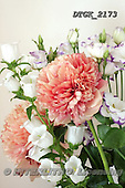 Gisela, FLOWERS, BLUMEN, FLORES, photos+++++,DTGK2173,#f#