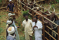 Veterinary  explaing to fulani shepherds the importance of vaccination