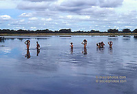 Ecotourism. Tourists cross a river walking in Pantanal Matogrossense, Brazil.