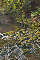 A small stream flows through Muir Woods National Park in Marin County, California