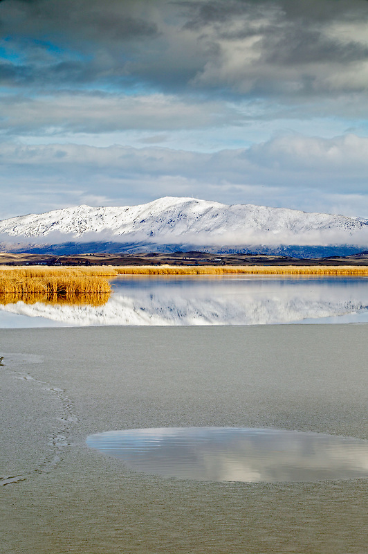 Reflection in pond with ice. Lower Klamath Lake National Wildlife Refuge, California