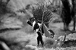 A berber young girl carrying wood for to get warm and cook, near to lake Tisli, Imchil, in Atlas Mountains.