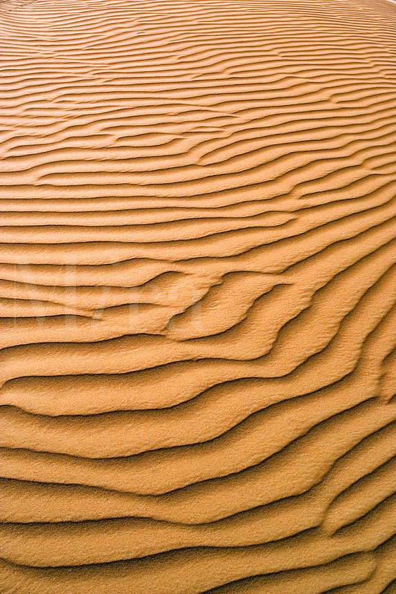 Ripples created by wind erosion in the sand of desert. Dubai. United Arab Emirates.