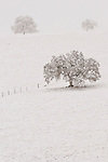 Snow covered ranch lands and oaks during winter in the Sierra Nevada Foothills of central Calif.