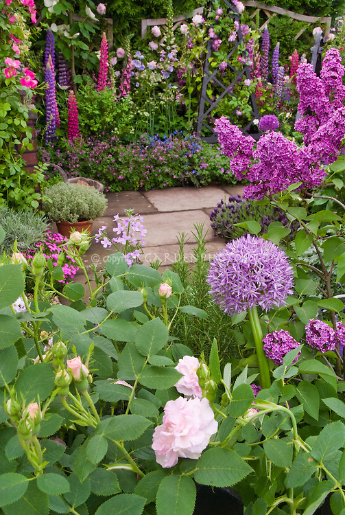 Fragrant Perennial Garden In Late Spring Or Early Summer