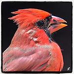 Tom Priddy Bird Photography