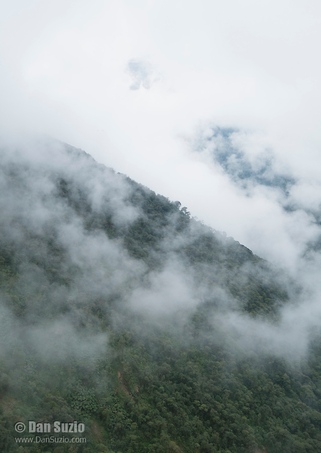Clouds at Yanacocha Reserve, a 2,371 acre protected area (elevation 10,500 feet) on the western slopes of Mount Pichincha, near Quito, Ecuador