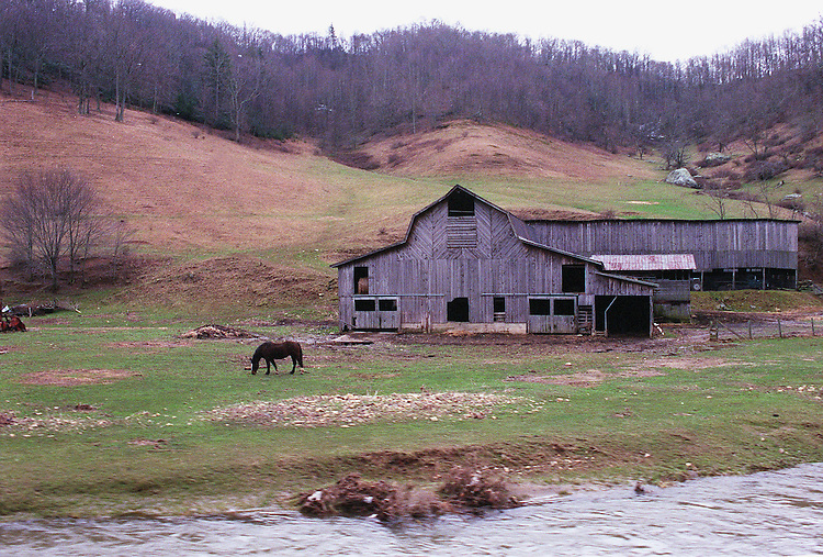 2/18/98.TOBACCO--   Burley cured tobacco farm beside the Watauga River in Watauga County North Carolina..CONGRESSIONAL QUARTERLY PHOTO BY DOUGLAS GRAHAM