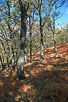 Autumn woodland Sierra de Tormantos mountains, near Cuacos de Yuste, La Vera, Extremadura, Spain
