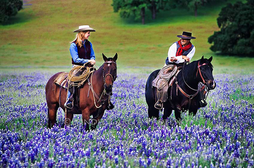 Cowboy and cowgirl riding in a flower field at Santa Margarita, California