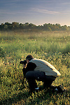 Photographer at, Los Banos State Wildlife Area, Central Valley, Merced County, California
