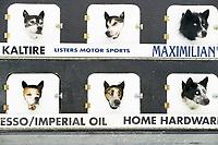 Sled dogs, 1000 mile 2004 Yukon Quest in Fairbanks, Alaska